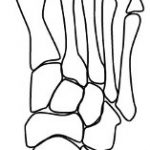 口臭と足裏反射区~歯周病